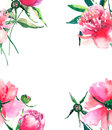 Beautiful delicate tender cute lovely floral colorful spring summer pink, red, orange peonies with green leaves and buds frame wat
