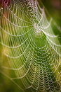 Beautiful detail of the cobwebs Royalty Free Stock Photography