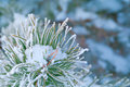 Beautiful details of nature in winter Royalty Free Stock Photography