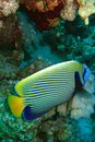 Beautiful and diverse coral reef with fishes of the red sea in Egypt Royalty Free Stock Photo