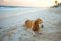 Beautiful dog on the beach see my other works in portfolio Royalty Free Stock Photos