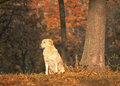 Beautiful dog in a park autumn Stock Photography