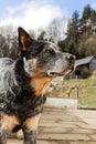 A beautiful dog in portrait.