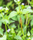 Beautiful Dragonfly In Nature