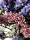 Beautiful dried flowers