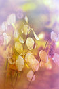 Beautiful dry plant in autumn seeds Royalty Free Stock Photo