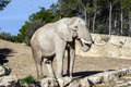 Beautiful elephant in safari park Royalty Free Stock Photography