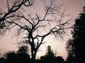 Beautiful Evening Dawn