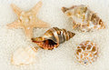 Beautiful exotic shell and pearls Royalty Free Stock Photos