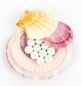 Beautiful exotic shell and pearls Stock Photo