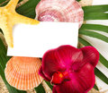 Beautiful exotic shell, starfish and orchid Royalty Free Stock Images