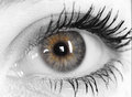 Beautiful eye of woman young Royalty Free Stock Photo