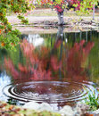Beautiful fall scenery with tree reflection Stock Image