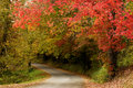 Beautiful Fall Trees with Curving Road Stock Images