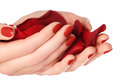 Beautiful female finger nails with red nail closeup on petals. P Royalty Free Stock Photo