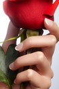 Hands with french manicured nails and red rose flower