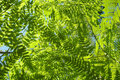 Beautiful fern leafs background green Stock Images