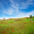 A beautiful field of poppies under blue sky Royalty Free Stock Photo