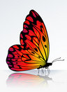 Beautiful fire-colored butterfly