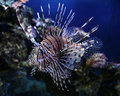 Beautiful fish photo unusual marine Stock Image