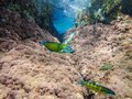 Beautiful Fish Underwater In The Mediterranean Sea, Beautiful Green And Blue Fish Among The Rocks Under The Mediterranean Sea, Fis