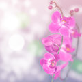Beautiful floral abstract background isolated orchids Royalty Free Stock Image