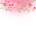 Beautiful floral abstract background orchids isolated on white a Royalty Free Stock Photography