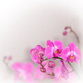 Beautiful floral abstract background orchids isolated on a white Royalty Free Stock Image