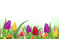 Beautiful floral background Royalty Free Stock Image
