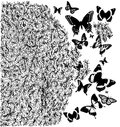 Beautiful floral illustration with amazing butterflies