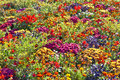 Beautiful flower bed in summer Royalty Free Stock Photo
