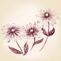 Beautiful flower daisies vector illustration flowers drawing isolated Stock Image