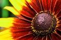 Beautiful flower at frederik meijer gardens sculpture park grand rapids michigan Stock Photography