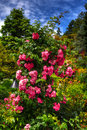 Beautiful flower garden in hdr high dynamic range Royalty Free Stock Images