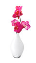 Beautiful flower Orchid, pink phalaenopsis in vase isolated Royalty Free Stock Photo