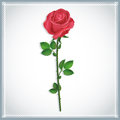 Beautiful flower red rose white background vector illustration Royalty Free Stock Photos