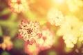 Beautiful Flower In Sunlight. ...