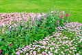 Beautiful flowerbed in summer park Stock Image
