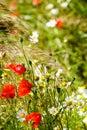 Beautiful Flowering Meadow Wit...