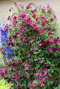 Beautiful flowering plants with blue and purple blossoms Royalty Free Stock Photo
