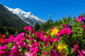 Beautiful flowers below the mountain Royalty Free Stock Photo