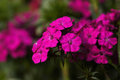 Beautiful flowers closeup photo of Royalty Free Stock Image
