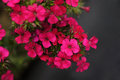 Beautiful flowers closeup picture of Royalty Free Stock Photos