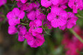 Beautiful flowers closeup picture of Royalty Free Stock Images