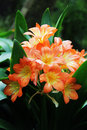 Beautiful Flowers Flora Orange Lily