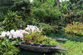 Beautiful Flowers Flora Plant Garden