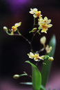 Beautiful Flowers Flora Yellow Little Orchid
