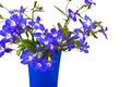 Beautiful flowers Lobelia Royalty Free Stock Photo