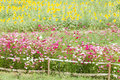 Beautiful flowers in the meadow Royalty Free Stock Photos