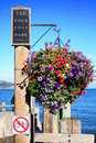 Beautiful flowers in sausalito california Royalty Free Stock Photo